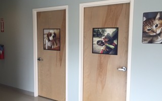 The doors of two of the exam rooms with pictures of dogs on them